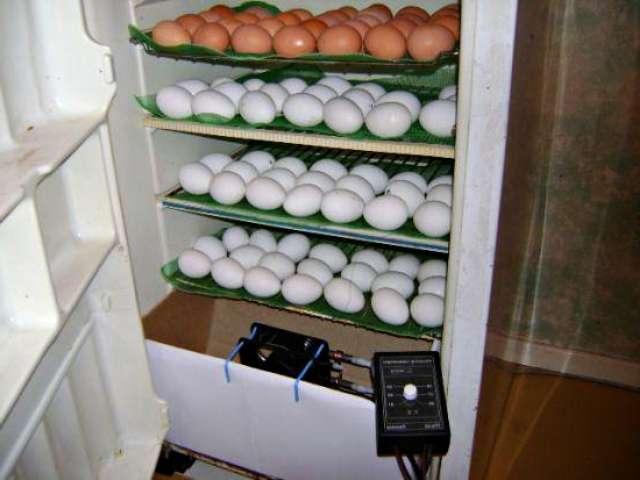 Инкубатор своими руками в домашних условиях из холодильника
