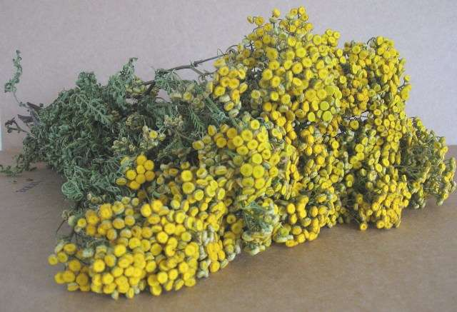 как выглядит трава пимжа в живую