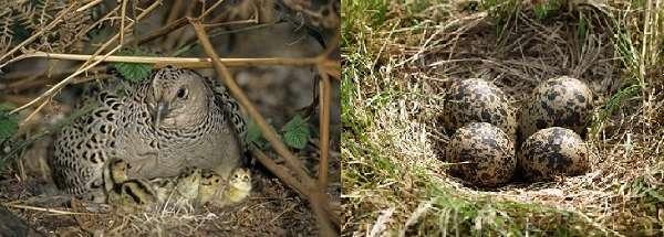 В естественной среде обитания, а именно в безопасном месте под кустом