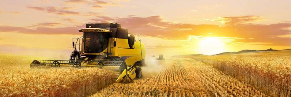 Фермерское хозяйство своими руками: с чего начать, советы и полезная информация