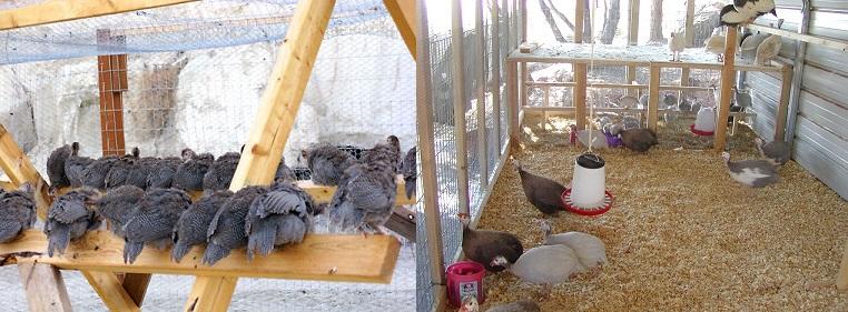 Внутри строят насесты для птицы, вверх от пола около полуметра.