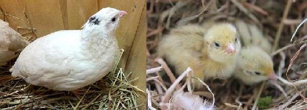 Птица хорошо себя чувствует в небольших клетках
