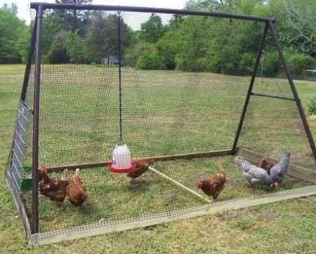 Клетка для клуши с цыплятами своими руками 90