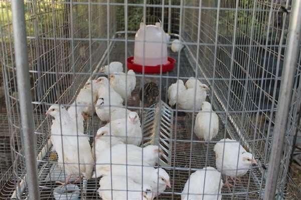 Для более легкого веса конструкции, чтобы изготовить клетку для цыплят своими руками