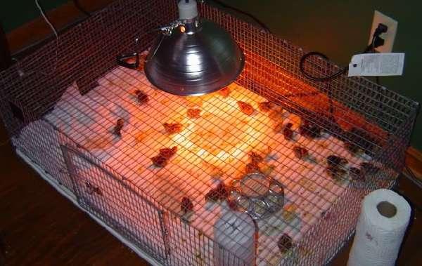 В специализированных магазинах можно купить в готовом виде много полезных в птицеводстве веще