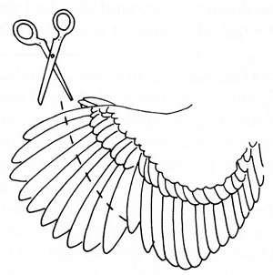 инструкция по обрезке крыльев в домашнем хозяйстве