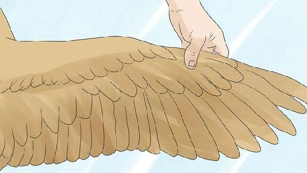 как же правильным образом подрезать курам крылья?