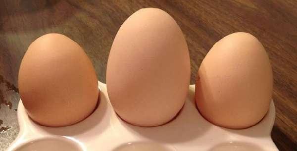 Курица, имеющая маленькое по размеру тело, снесет соответственно маленькое яйцо.