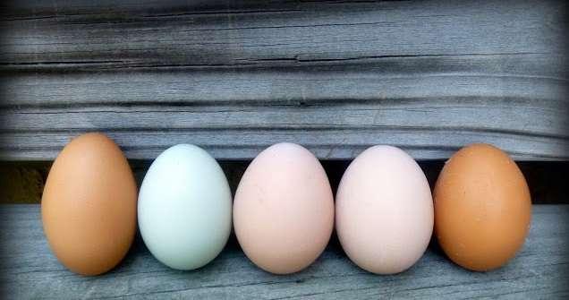 почему яйца разного цвета у кур