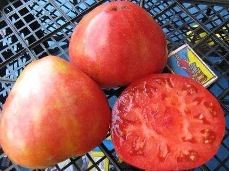Один из самых известных томатов сибирской селекции.