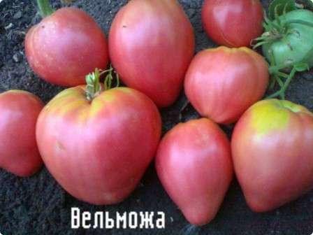 Первое, что хочется особо отметить в это сорте томатов — это устойчивость к болезням и нейтральная реакция на понижение температуры.