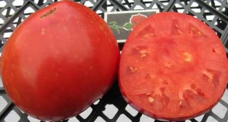 Этот сорт дополнил томаты сибирской селекции для открытого грунта, ранние, низкорослые.