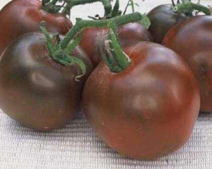 Черный принц — высокорослый томат, срок созревания средний, плоды сладкие, крупные (300-400 г), имеют темный окрас, плохо хранятся, урожайный показатель — 10 кг/м².