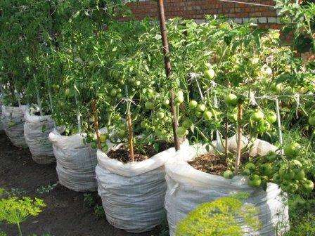 Как вырастить томаты в мешках в открытом грунте?