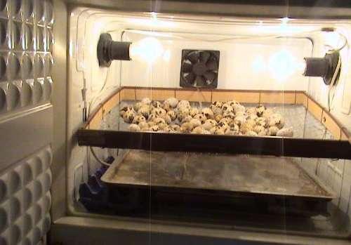 терморегулятор для инкубатора купить