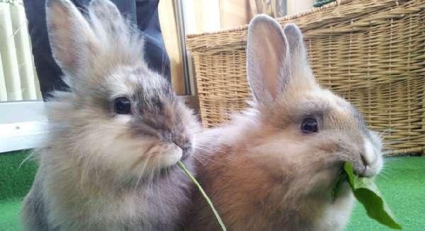 маленький кролик чем кормить