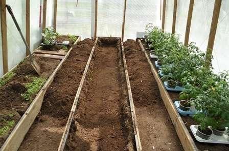 Осенью в теплице из поликарбоната или стекла желательно заменить 5…10-сантиметров почвы и собрать все растительные остатки.