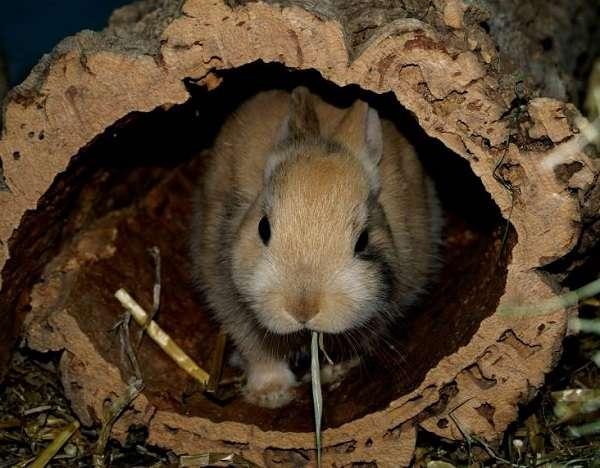 разведение кроликов в яме видео