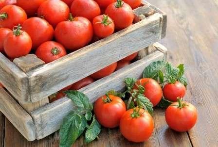 Хотите узнать, какие сорта помидор самые урожайные для теплиц?