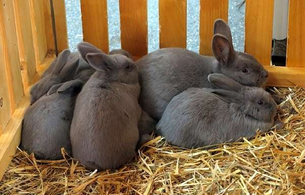 кролиководство для начинающих видео