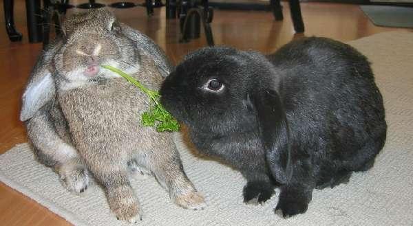 спаривание кроликов в домашних условиях для начинающих