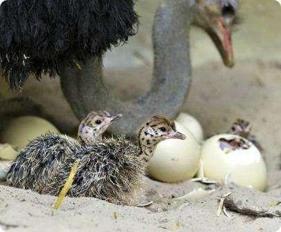 Что касается кормушек, то их количество должно соответствовать общему количеству птиц. К тому же кормушки должны быть устойчивыми к опрокидыванию и прочными.