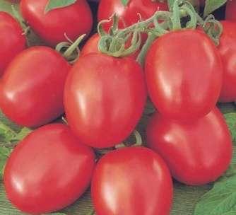 Высокоурожайный гибрид помидоров от голландских селекционеров.
