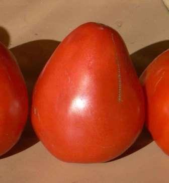 К слову, томат Буденовка уже успел прочно обосноваться на участках тысяч земледельцев во всех регионах.