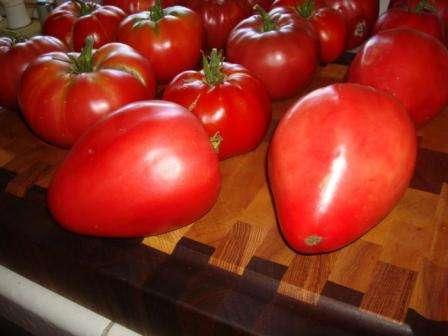 Не лишайте себя удовольствия — посадите томат Мазарини! Характеристика и описание сорта, находящиеся в этой статье, ближе познакомят вас с ним.