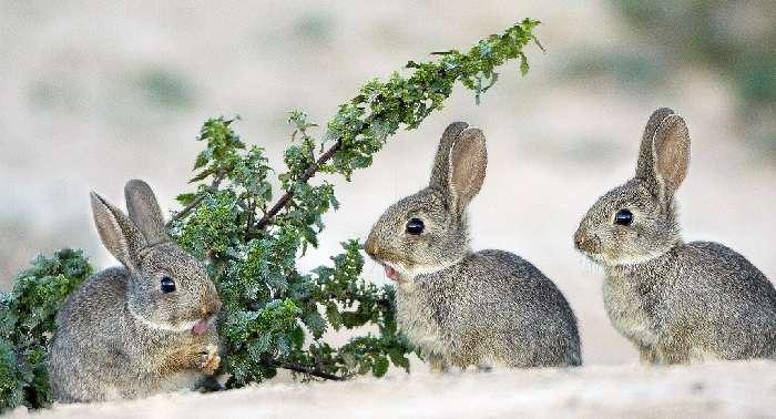 разведение кроликов зимой на улице