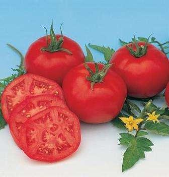 Неприхотливый гибрид томатов для открытого грунта, высотой до 50 см.