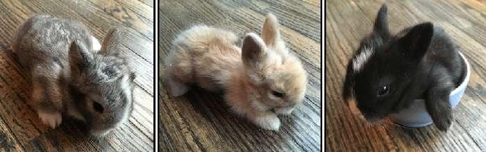 когда крольчат отсаживают от крольчихи