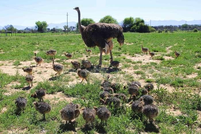 Начинающим птицеводам стоит узнать больше о некоторых требованиях, касающихся их содержания