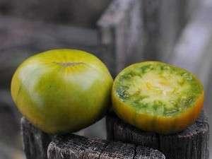 Малахитова шкатулка — этот сорт уникален тем, что огромные плоды в спелом состоянии имеют зеленый окрас и привкус дыни.