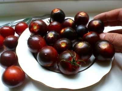 Блэк черри — высокорослый гибрид с темными плодами десертного вкуса.