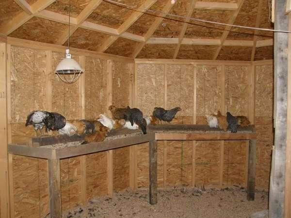 Фото сарай для животных своими руками