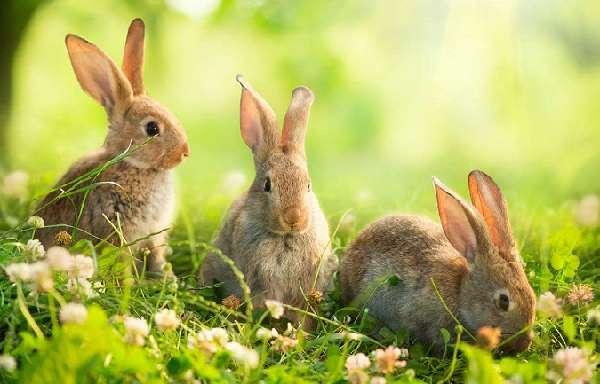 Комбикорм своими руками для кроликов