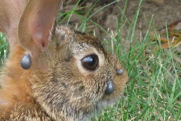 обработка клеток для кроликов