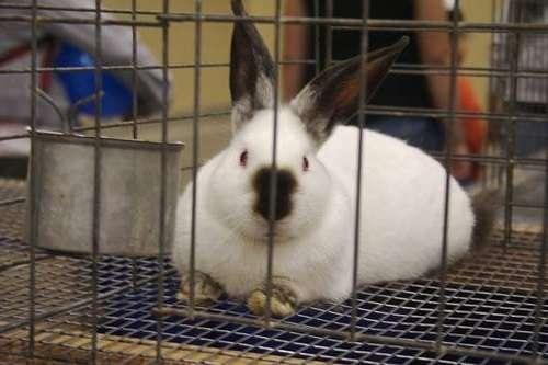 изготовить металлические клетки для кроликов, чертежи с размерами