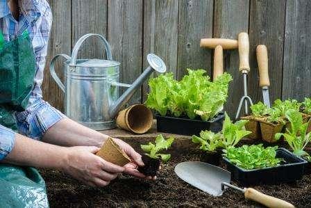Лунный посевной календарь садовода - огородника на май 2019 новые фото