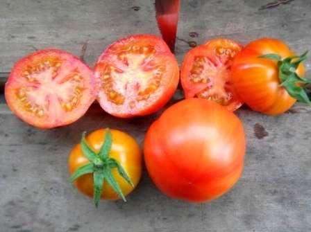 На фото внизу видно, как выглядит помидор сорта Санька в разрезе.