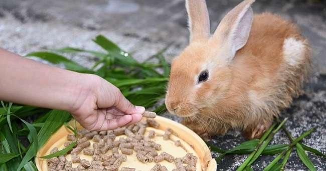 Корма для кроликов своими руками состав