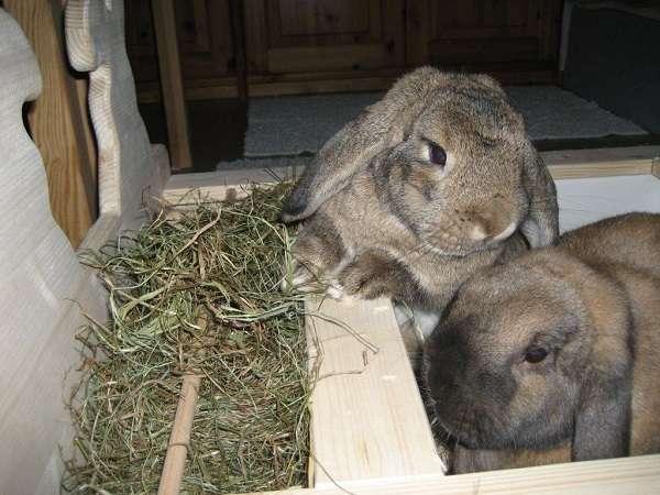 Как сделать сенники для кроликов своими руками?
