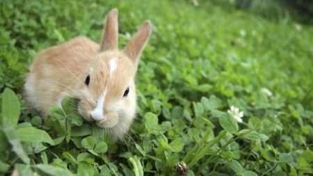 корм для кроликов своими руками в домашних условиях