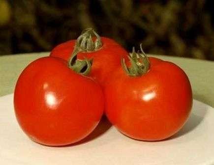 Один из самых популярных сортов, семена которого попадают на наши рынки из Голландии.