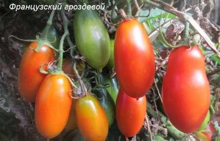 Они собраны в кисти по 10-20 штук, имеют удлиненную форму. Средний вес одного спелого помидора — 90 г.