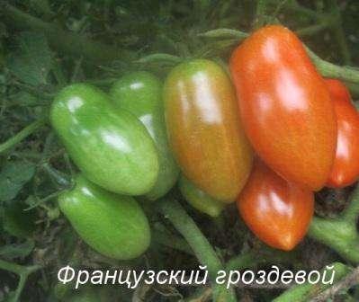 Отдельно следует упомянуть об уходе за томатами в теплице.