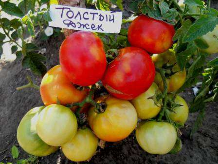 В Ростовской области его можно сажать сразу в открытый грунт.