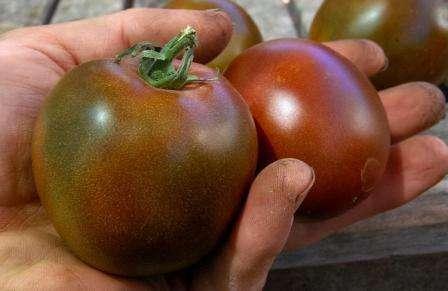Среди томатов других цветов и оттенков можно назвать: Де Барао Черный, Груша черная, Крем брюле, Сахар коричневый, Белое сердце, Белое чудо, Золото Чеоки Грин, Изумрудное яблоко, Черная галактика, Черный принц