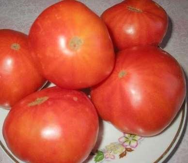 Томат Хлебосольный можно успешно выращивать не пасынкуя, но если вы хотите получить по-настоящему огромные плоды, то оставьте всего один или два ствола.